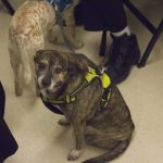 Cute Dogs at workshop.